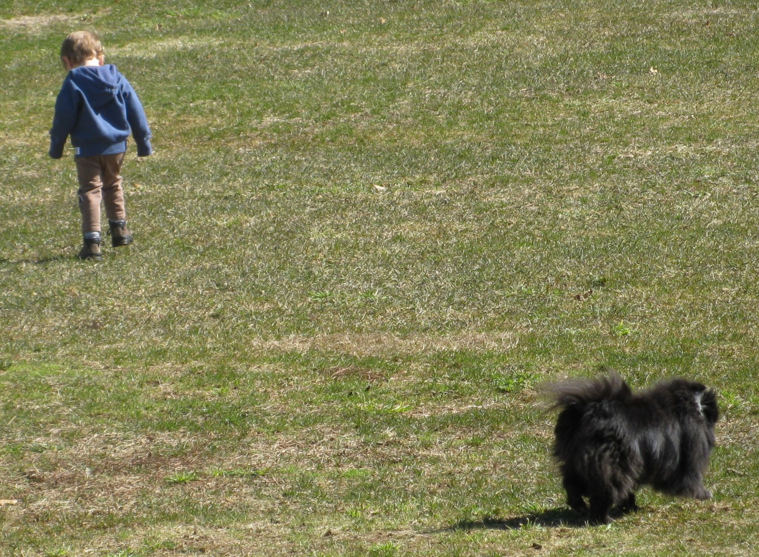 Crystal and Mason walking at the park - Manchester Veterinary Clinic - CT