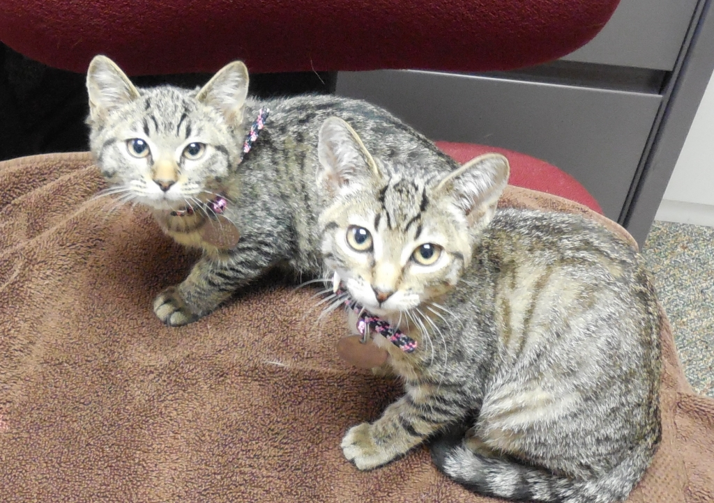 Dr. Allen's girls; River & Faye - Manchester Veterinary Clinic - CT